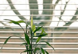 blinds-home-page-small
